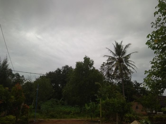 Palm trees on landscape against sky