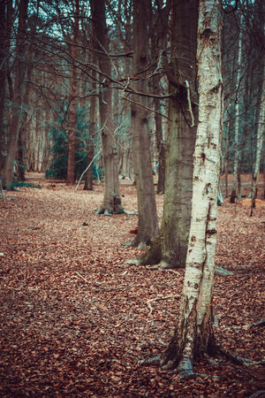Beauty In Nature Day Forest Growth Landscape Lots Of Leaves Nature No People Outdoors Scenics Silver Birch Tranquil Scene Tranquility Tree Tree Trunk Trees Vibrant Color Walk In The Forest Walk In The Woods WoodLand