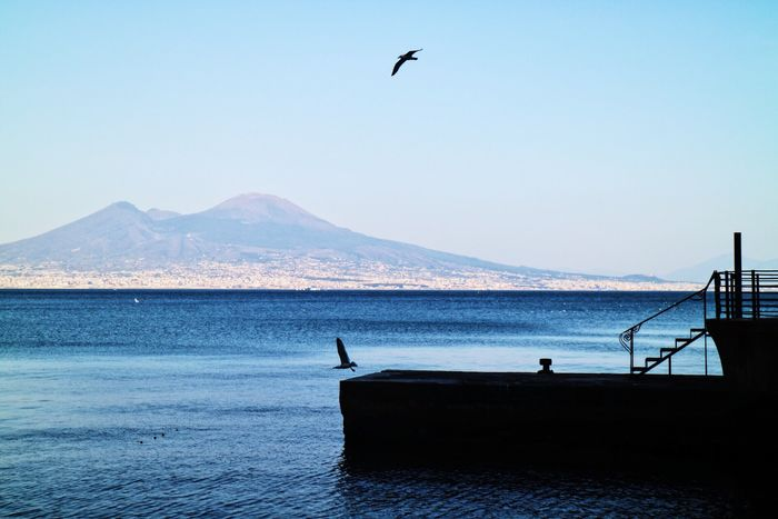 Water Animal Themes Nature Bird Animals In The Wild Clear Sky Beauty In Nature Sea Scenics Tranquil Scene Mountain Tranquility Outdoors Day Mountain Range No People Sky Napoli