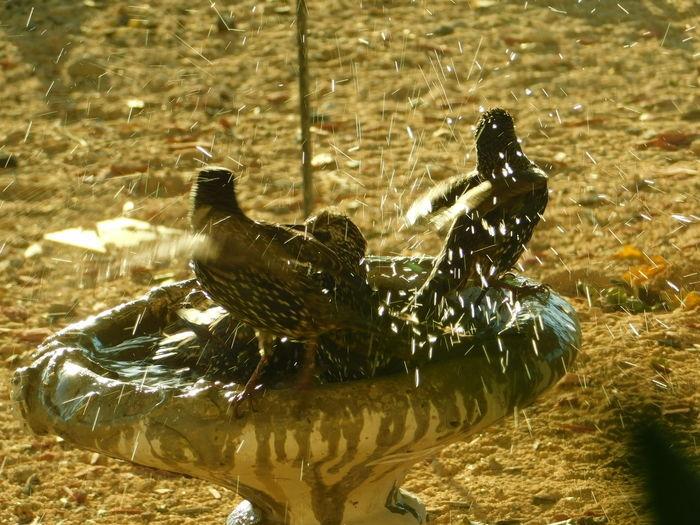 Cooling down... Roadrunner Birdbath High Desert High Desert Wildlife Bird Birds