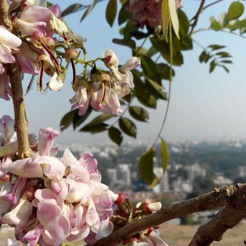 Wild flower! Documentary Shoot Exploring Pune Mobile Photography Hilltop Vantagepoint Parvatihills Nofilter
