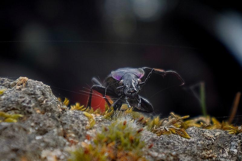 Beetle's dance