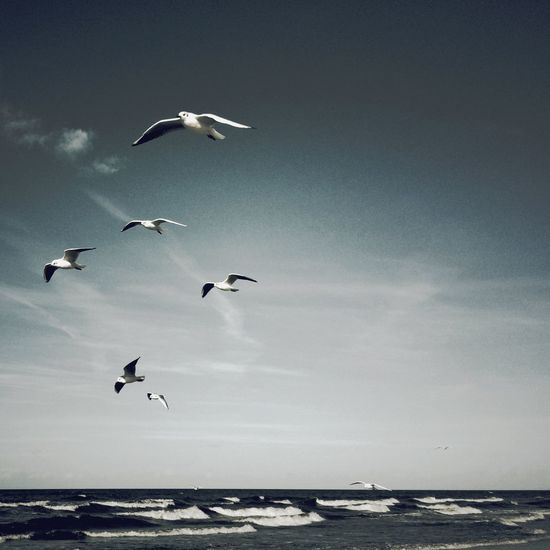 Seagulls flying over sea