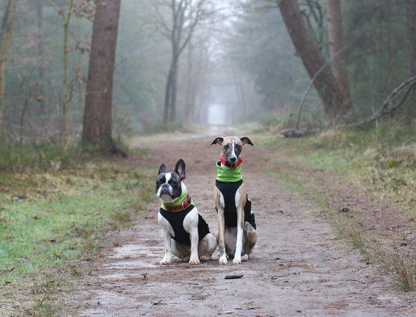 Dogs Französische Bulldogge  Frenchbulldog Friends Friendship Hunde Hundefreundschaft Let's Go. Together. Pet Portraits