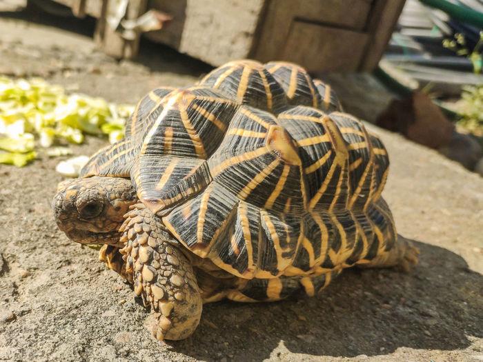 Close-up of tortoisetortoises are reptile species of the family testudinidae