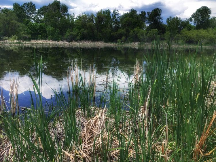 Belmar Park Lakewood Colorado Lakewood Co Belmar Belmar Park Beautiful IPhoneography Beautiful Day Outdoors IPhone Photography Scenic Beauty In Nature Iphonephotography EyeEm Nature Lover Iphone6s Sky Cloud Landscape IPhone View Tranquility