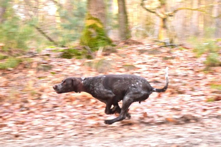 zoë the sprinter! I Love My Dog Dog Gsp Animal Themes Outdoors Active Walking Weekend Feel Free, Be Free Enjoying Life My Bestfriend My Girl Brave Girl Nikon