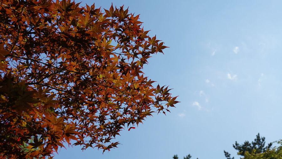 葉っぱ 紅葉 日本 Japan Leaf Nature Clouds And Sky 白石城