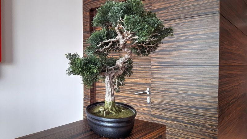 Arrangement Bonzai Design Door Home Lonely Tree No People Plant Showcase March Wall Wood Wood - Material Wooden Interior Design Interior Views