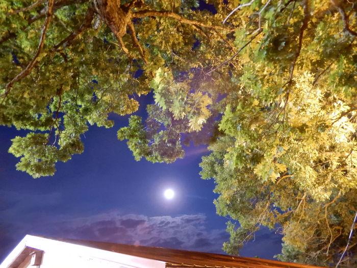 full moon Tree