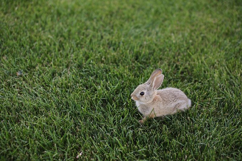 Hippity hoppity. Bunny  Rabbit Grass Easter Bunny