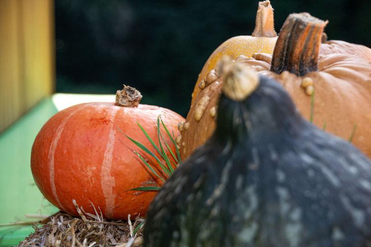 Close-up of pumpkin against orange sky