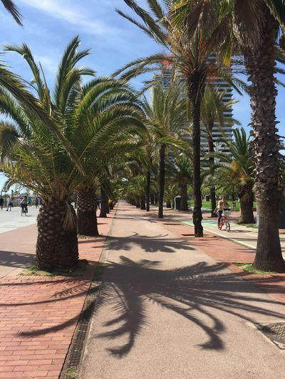 Footpath leading towards palm trees