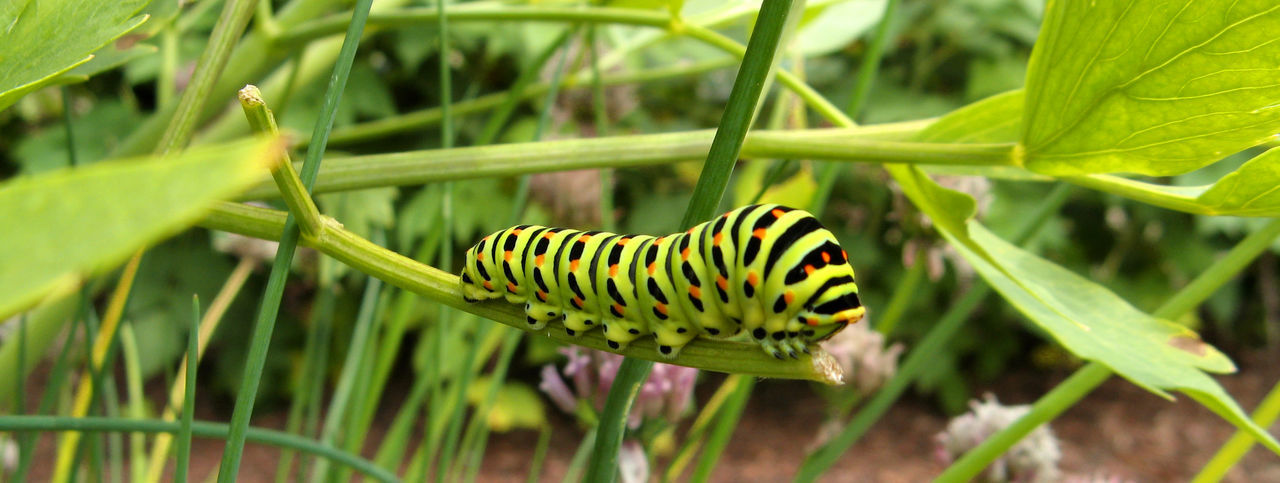 Botany Butterfly Caterpillar Garden Grass Green Green Color Grub Insect Insects  Leaf Macro Nature Plant Wildlife