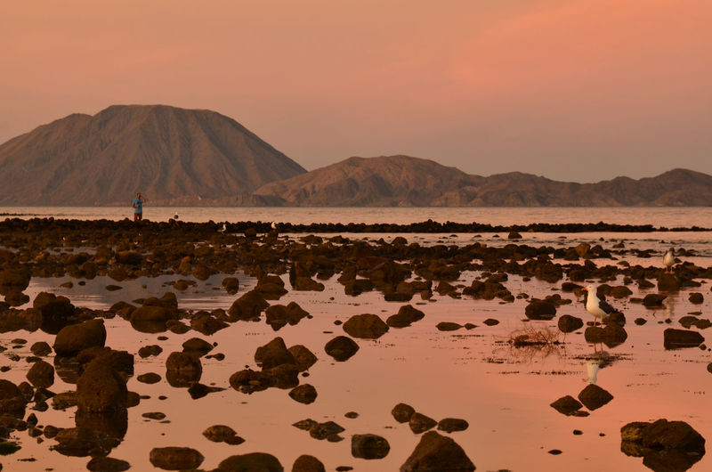 pink sunrise sky reflected in rocky water shore, solitary man using binoculars, low tide Bahia Los Angeles, Baja, Mexico Mexico Rocky Rocky Beach Bahia De Los Angeles Baja Beach Beauty In Nature Geology Idyllic Land Low Tide Man With Binoculars Mountain Nature Non-urban Scene Outdoors Rock - Object Scenics - Nature Seagull Sky Solitude Sunrise Sky Tranquil Scene Tranquility Water
