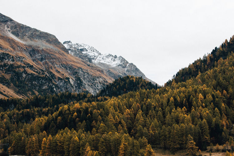 Scenic view of pine trees and mountains against sky in forest
