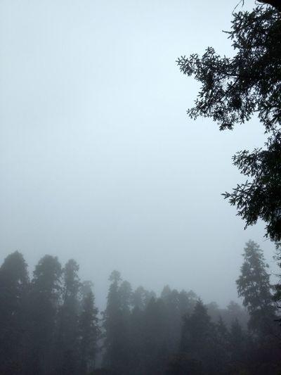 Sky Tree Nature Foggy Dark Outdoors Mist Forest Tree Fog Nature EyeEm Nature Lover Eyem Vision