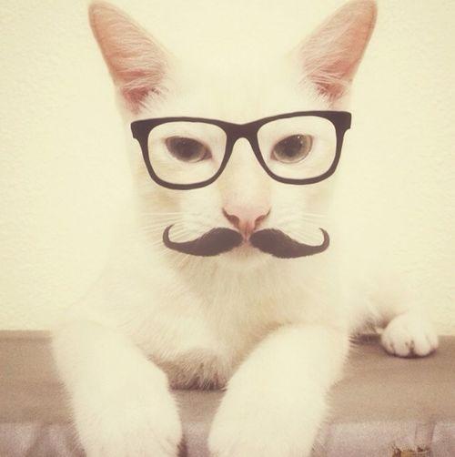 Mr Moustachio