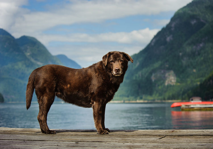 View of dog standing on wooden jetty by lake with mountains in background against cloudy sky