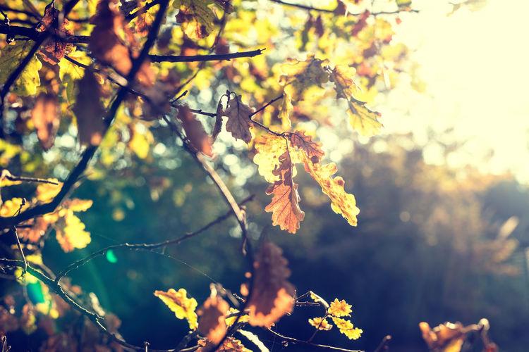Plant Tree Leaf
