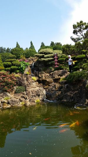 Garden Japonese Japonesegarden
