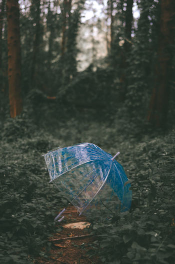 Rain in the forest. Tree Forest Plant Land Nature Day Outdoors Animal One Animal WoodLand Water Trunk Dark Umbrella Blue No People Focus On Foreground Tree Trunk Vintage Butterfly - Insect