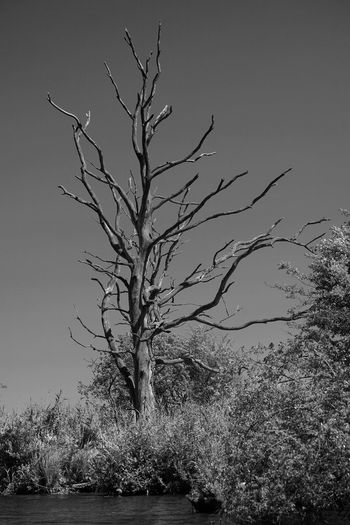 Bare tree by plants against sky