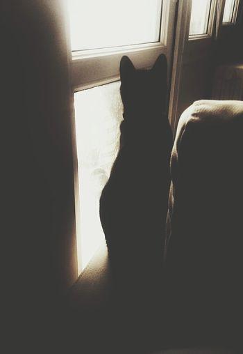 Good Morning BLackCat Blackcatsaregood Catoftheday Catlovers Blackandwhite Photography Black And White Collection