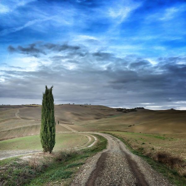 Valdorcia Tree Tuscany