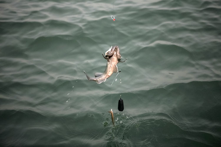 High Angle View Of Fish Hanging On Hook Over Sea