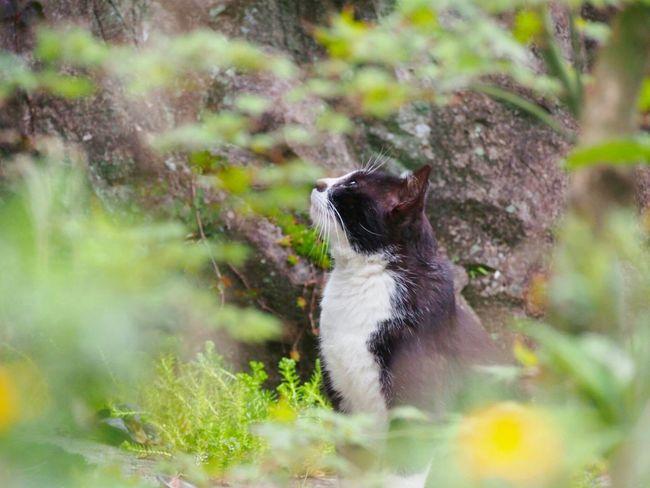たそがれニャンコ🐾 Cats Of EyeEm Cat 猫ぽとれ One Animal Animal Themes ℃-ute Taking Photos EyeEm Best Shots EyeEm Nature Lover Eyemphotography Springtime