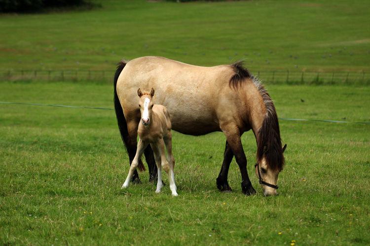 My best friend - Mom 🙂 Animal Animal Themes Animal Wildlife Domestic Domestic Animals Field Grass Green Color Horse Land Livestock Mammal Nature Pets