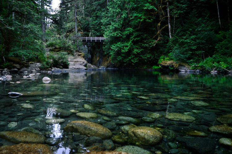 Green Color Reflection Beauty In Nature Bridge - Man Made Structure Clear Water Day Forest Growth Nature No People Outdoors Pure Water Rock - Object Scenics Tranquility Tree Underwater Water
