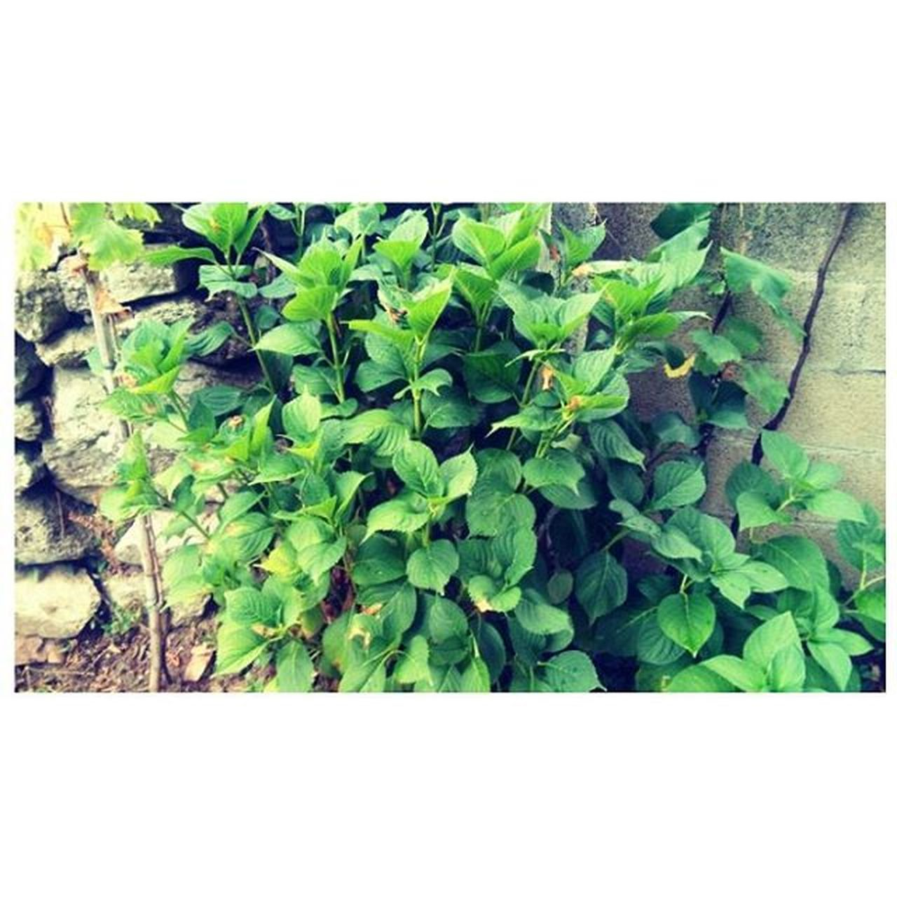 growth, plant, leaf, nature, green color, outdoors, day, no people, close-up