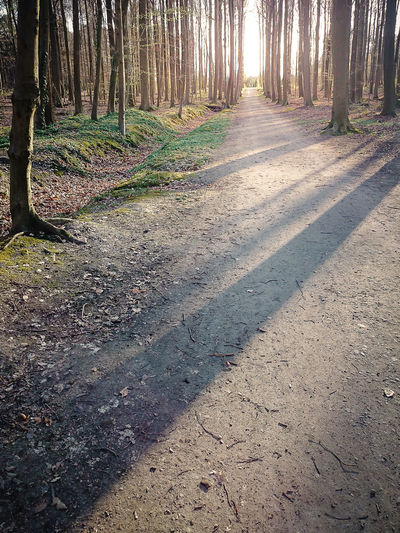 Autumn Bare Trees Beauty In Nature Day Fall Footpath Forest Leaves Nature No People Outdoors Shadow Shadow And Light Sonian Forest Sunlight Sunny Day Tranquil Scene Tranquility Tree Tree Area Tree Trunk Trunks Winter Wintertime Moss