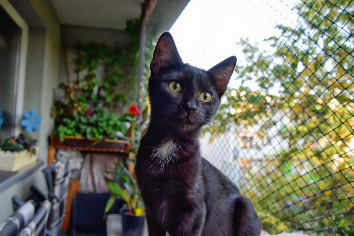 Porträt Hera Animal Animal Themes Black Color Cat Day Domestic Domestic Animals Domestic Cat Feline Focus On Foreground Looking At Camera No People One Animal Pets Portrait
