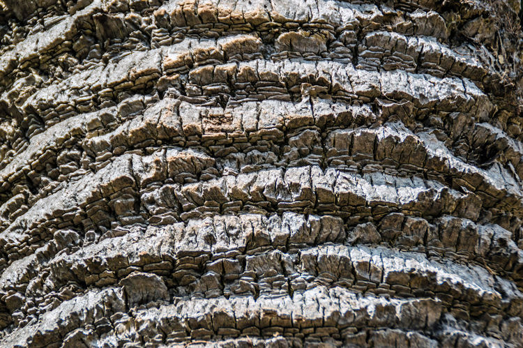 Apufoto Backgrounds Bark Bark Texture Cortex Full Frame Nature Naturelovers No People Palm Bark Texture Textures Textures And Surfaces Textures In Nature Texturestyles