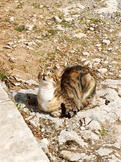 Cat Animal Sun
