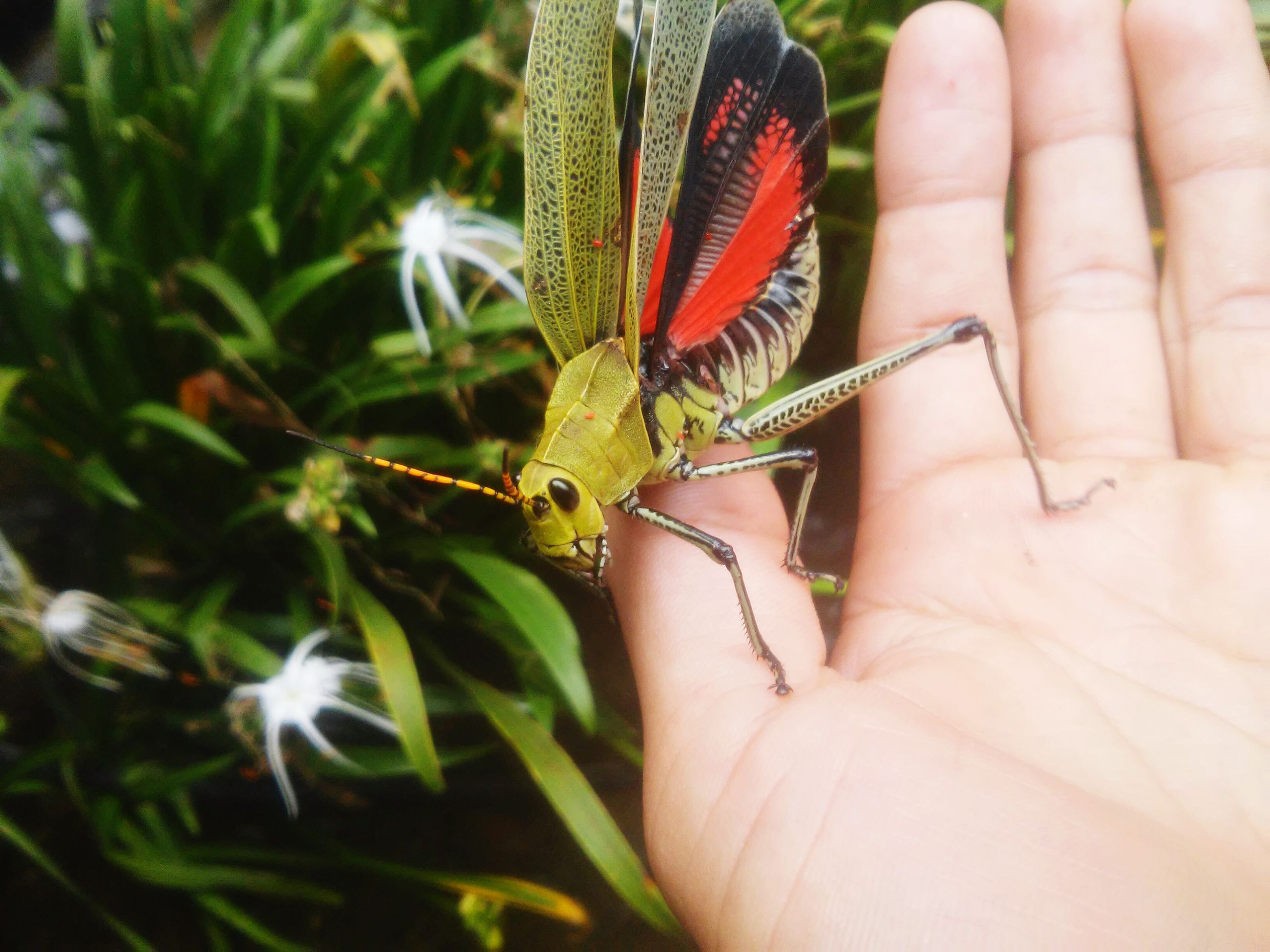 one animal, animal themes, animals in the wild, person, wildlife, insect, holding, human finger, part of, close-up, unrecognizable person, cropped, focus on foreground, lifestyles, butterfly - insect, leisure activity
