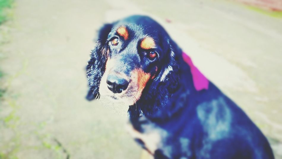 Mybeautifuldog Lovedogsforever Mydog♡ I Love My Dog love