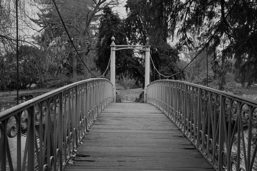Architecture Beauty In Nature Bridge - Man Made Structure Connection Day Footbridge Forest Growth Nature No People Outdoors Railing The Way Forward Tree Black & White Tranquil Scene Check This Out! Premium Collection Premium