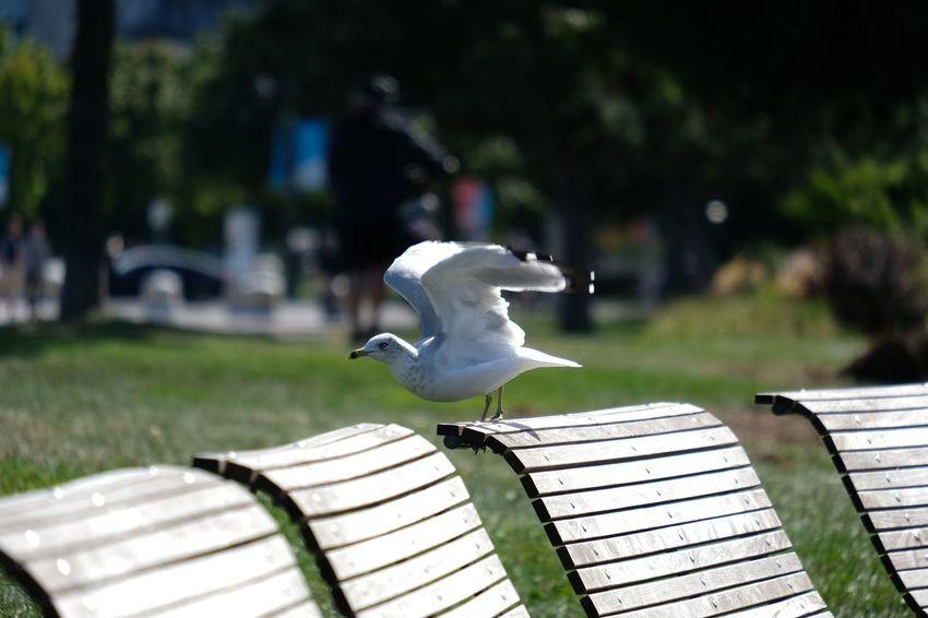 Animal Animal Representation Animal Themes Animal Wildlife Bench Bird Day Focus On Foreground Nature Outdoors Park Park - Man Made Space Representation Vertebrate