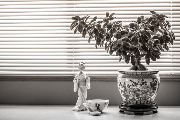 Arts Culture And Entertainment Asian  Asian Art Asian Culture Black And White Bowl Chinese Culture Chinese Figurine Chinese Porcelain Day Display Figurine  Ginseng Home Decor Home Interior Natural Light Oriental Oriental Design Oriental Style Potted Plant Pottery Rice Bowl Still Life Photography The Week On EyeEm Window