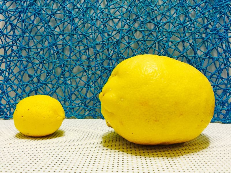 Lemon: Rare Giant Lemon Learn & Shoot: Simplicity Fruit Yellow Still Life Large Lemon Sizematters Fruit Isolated Lemon Size Gigantic Overgrown