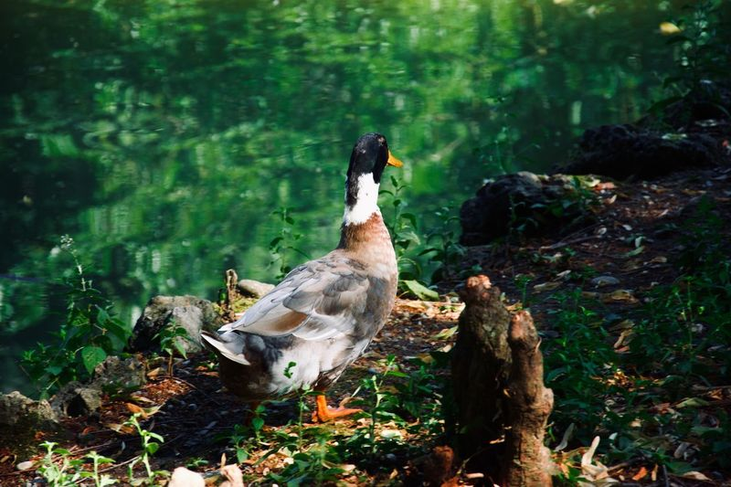 View of bird on rock in lake