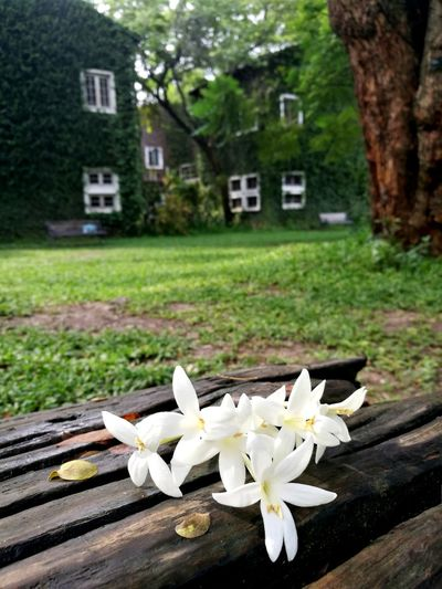 Coffee Time Flower Beautiful Chiangmai Chiang Mai   Thailand Tree Residential Building House Close-up Architecture Building Exterior Built Structure Grass