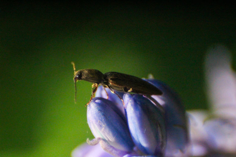Close-up of insect on purple flower