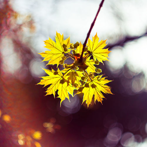 Beauty In Nature Branch Close-up Day Flower Flower Head Fragility Freshness Growth Nature No People Outdoors Petal Yellow