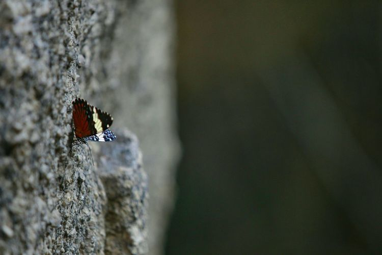 EyeEm Best Shots Buterfly Colors EyeEm Nature Lover Nature_collection Photography 70-200mm Forest Insect Check This Out