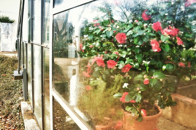 Growth Plant Nature Day No People Outdoors Tree Beauty In Nature Flower Freshness Architecture Close-up Greenhouse Braunschweig Brunswick Roses Winter Gewächshaus Botanical Garden Lieblingsplatz Flower Head Beauty In Nature Baldfrühling